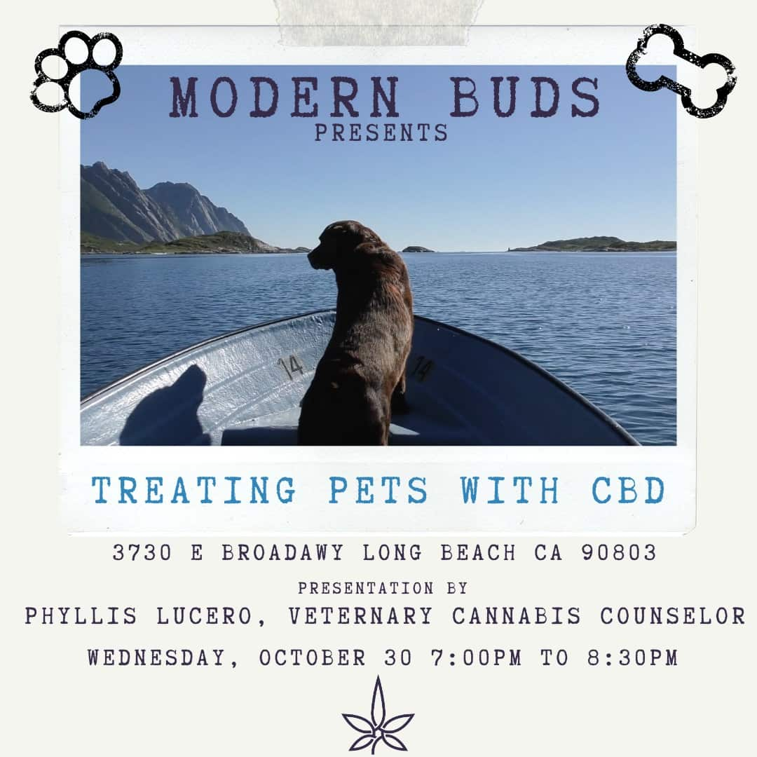 Treating Pets with CBD