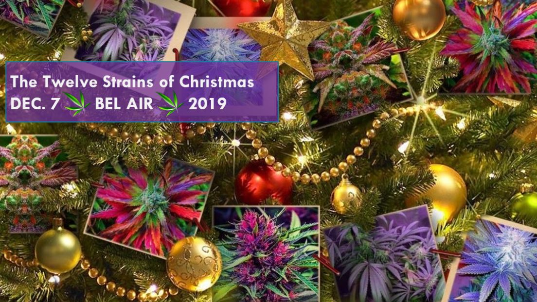 The Twelve Strains of Christmas