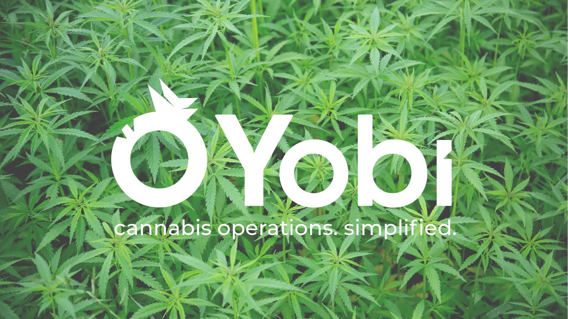Yobi Cultivation Lunch & Learn
