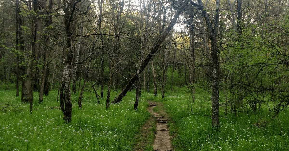 CannaVenture® Hike - TN - April 2020