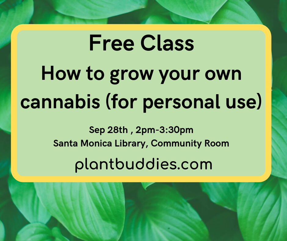 How to grow your own cannabis (for personal use)