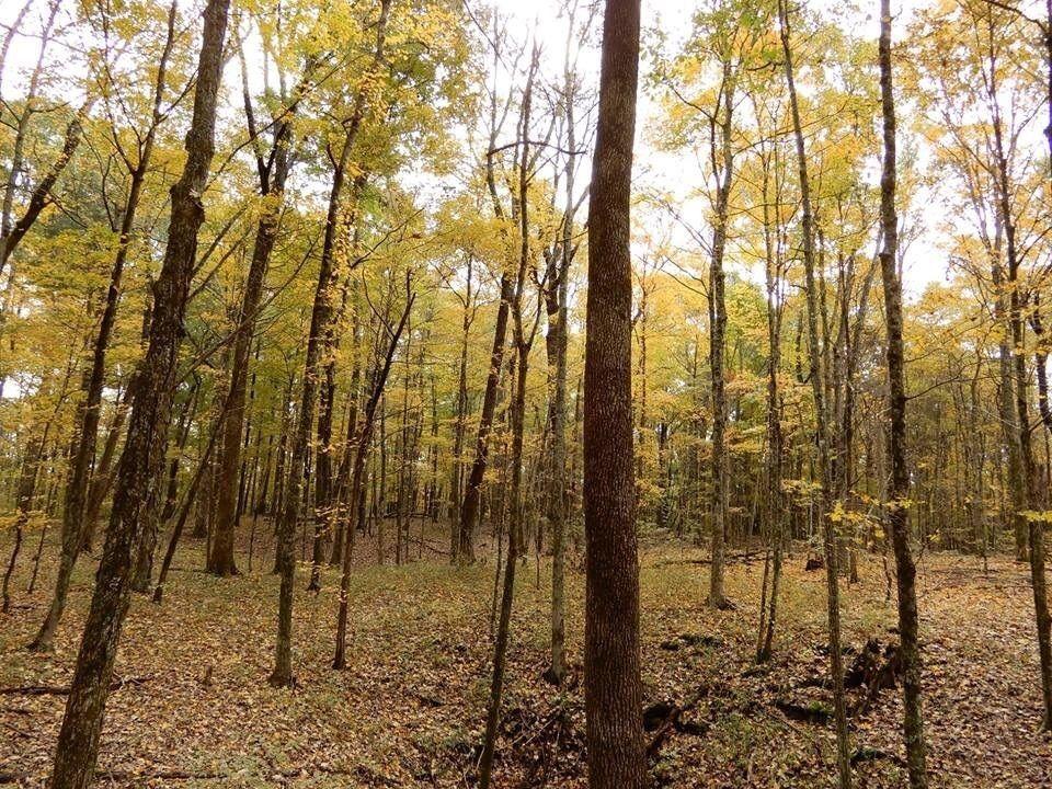 CannaVenture® - Halloween Hemp Hike – TN