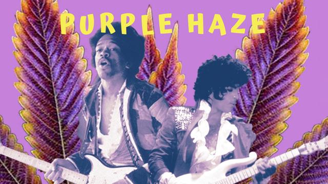 Purple Haze Palm Springs