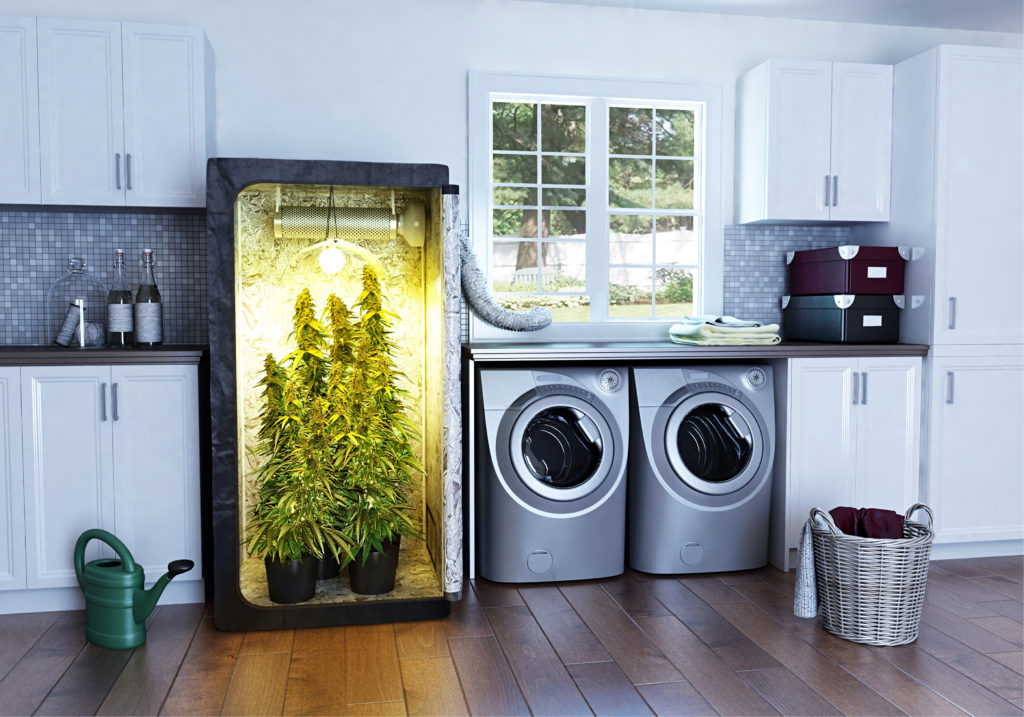 BUILD A GROW ROOM