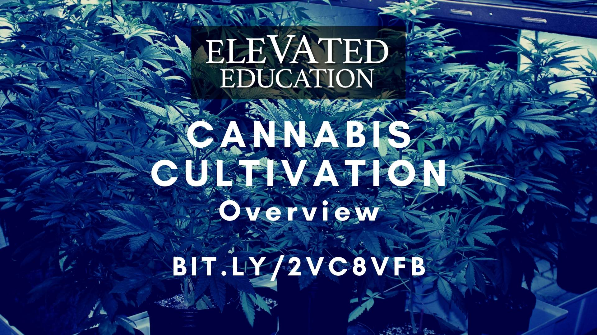 Cannabis Cultivation Overview (Elevated Education)